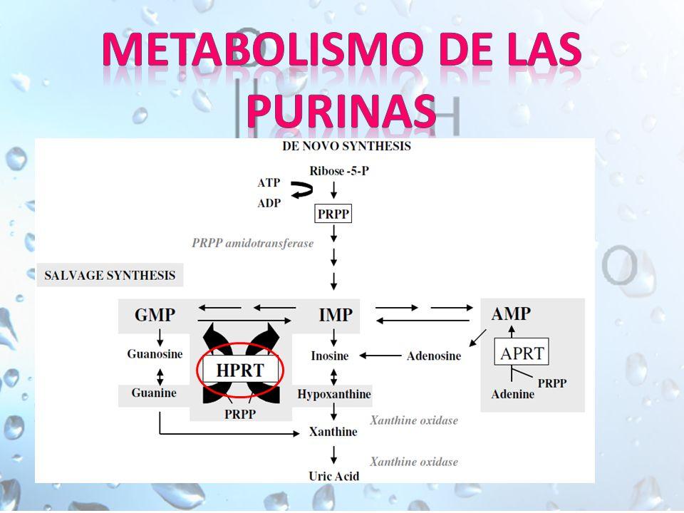 Metabolismo de las purinas