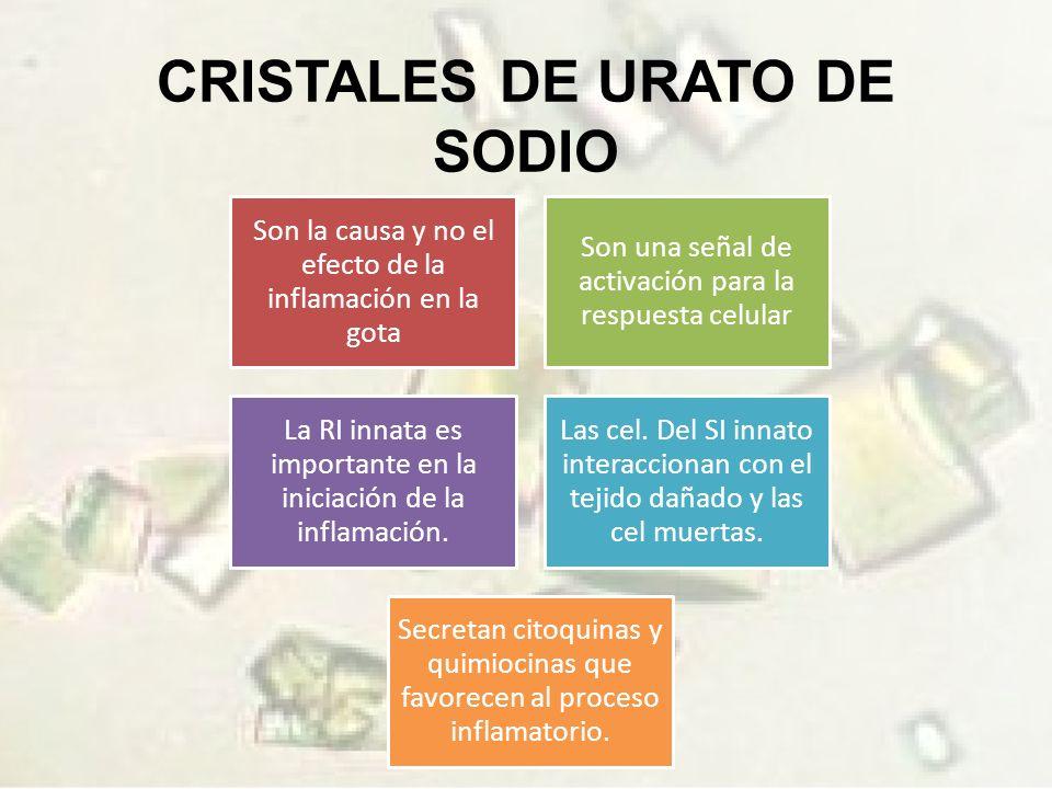 CRISTALES DE URATO DE SODIO