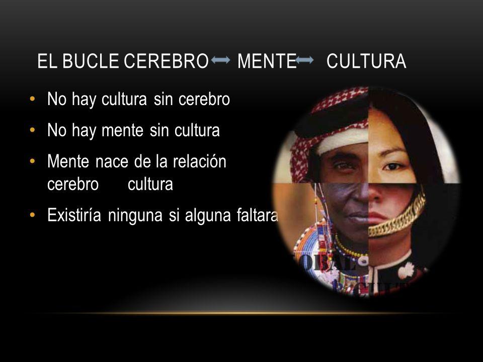 El bucle cerebro mente cultura