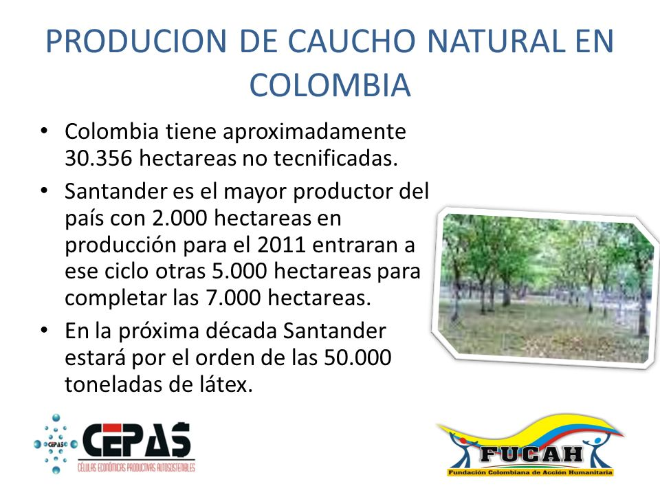 PRODUCION DE CAUCHO NATURAL EN COLOMBIA