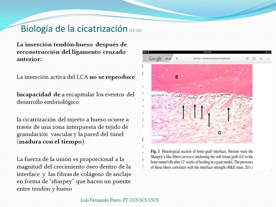 Biología de la cicatrización (13, 15)