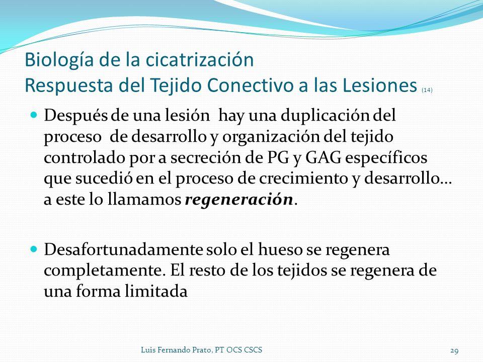 Biología de la cicatrización Respuesta del Tejido Conectivo a las Lesiones (14)