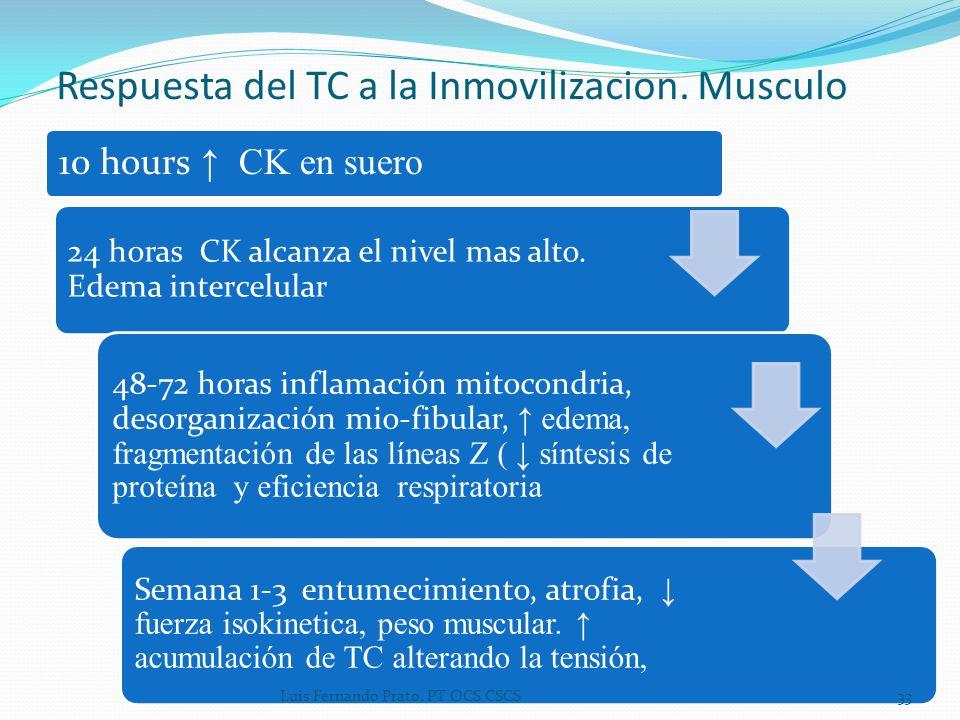 Respuesta del TC a la Inmovilizacion. Musculo