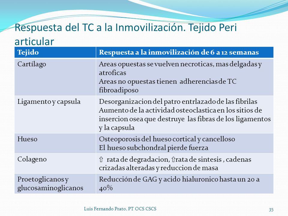 Respuesta del TC a la Inmovilización. Tejido Peri articular
