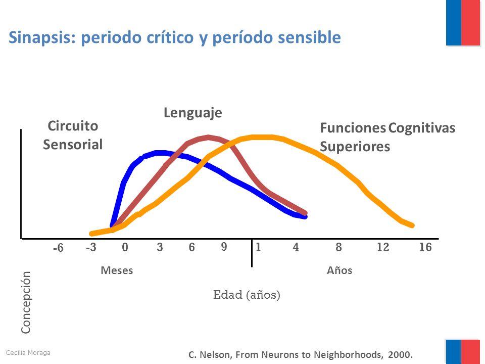 Sinapsis: periodo crítico y período sensible