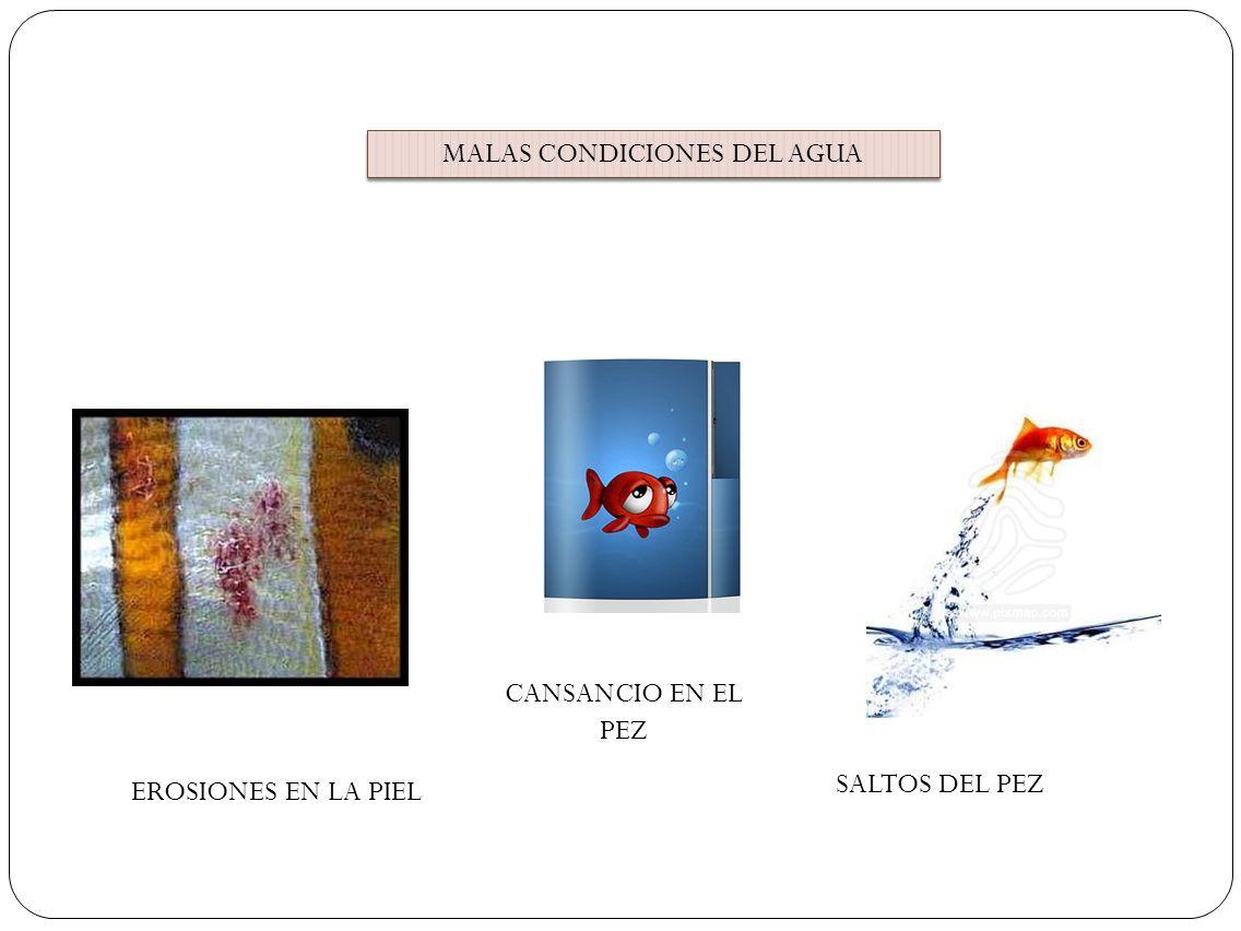 MALAS CONDICIONES DEL AGUA