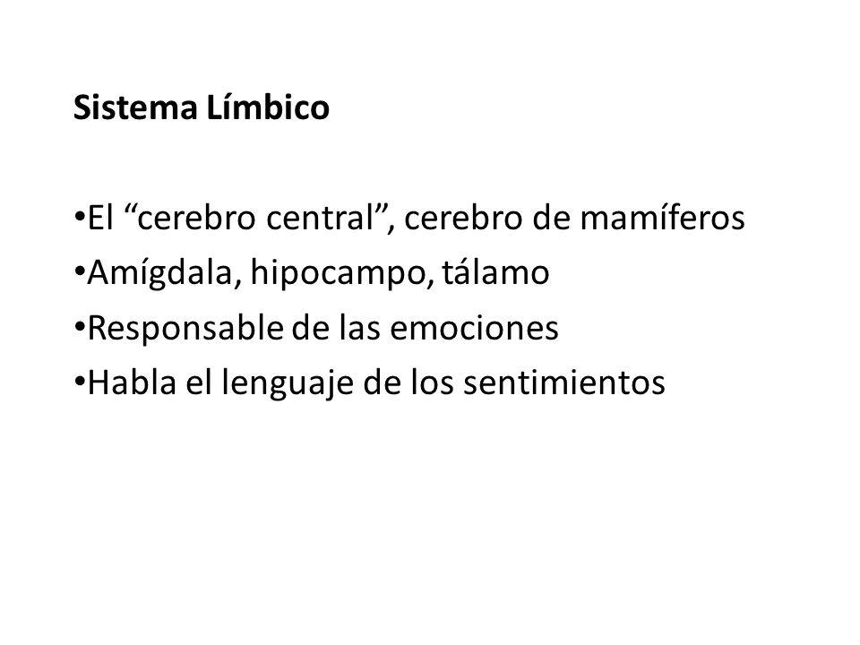 Sistema Límbico El cerebro central , cerebro de mamíferos. Amígdala, hipocampo, tálamo. Responsable de las emociones.
