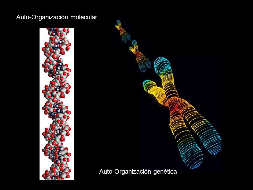 Auto-Organización molecular