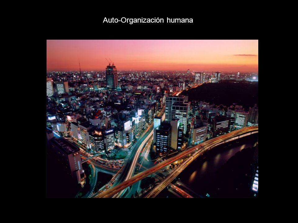 Auto-Organización humana