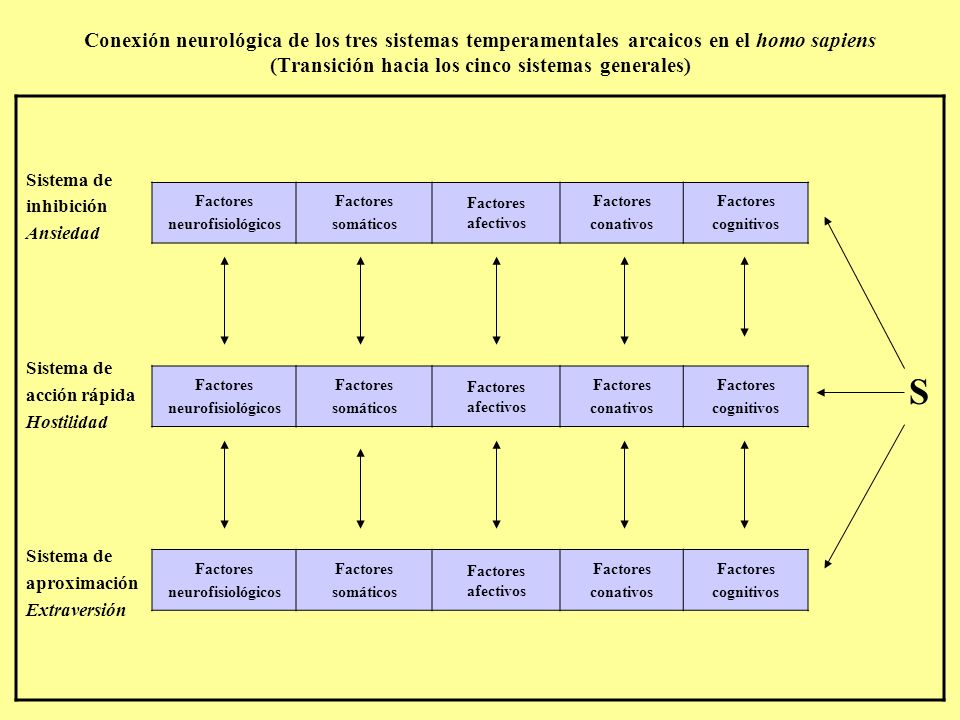 Conexión neurológica de los tres sistemas temperamentales arcaicos en el homo sapiens (Transición hacia los cinco sistemas generales)