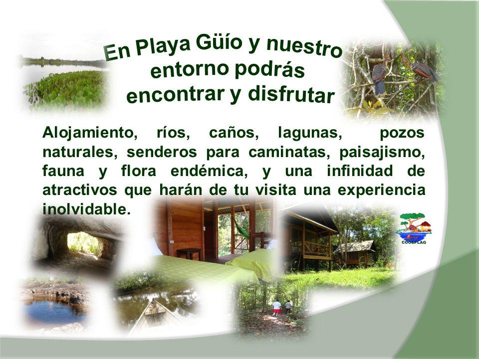 En Playa Güío y nuestro entorno podrás encontrar y disfrutar