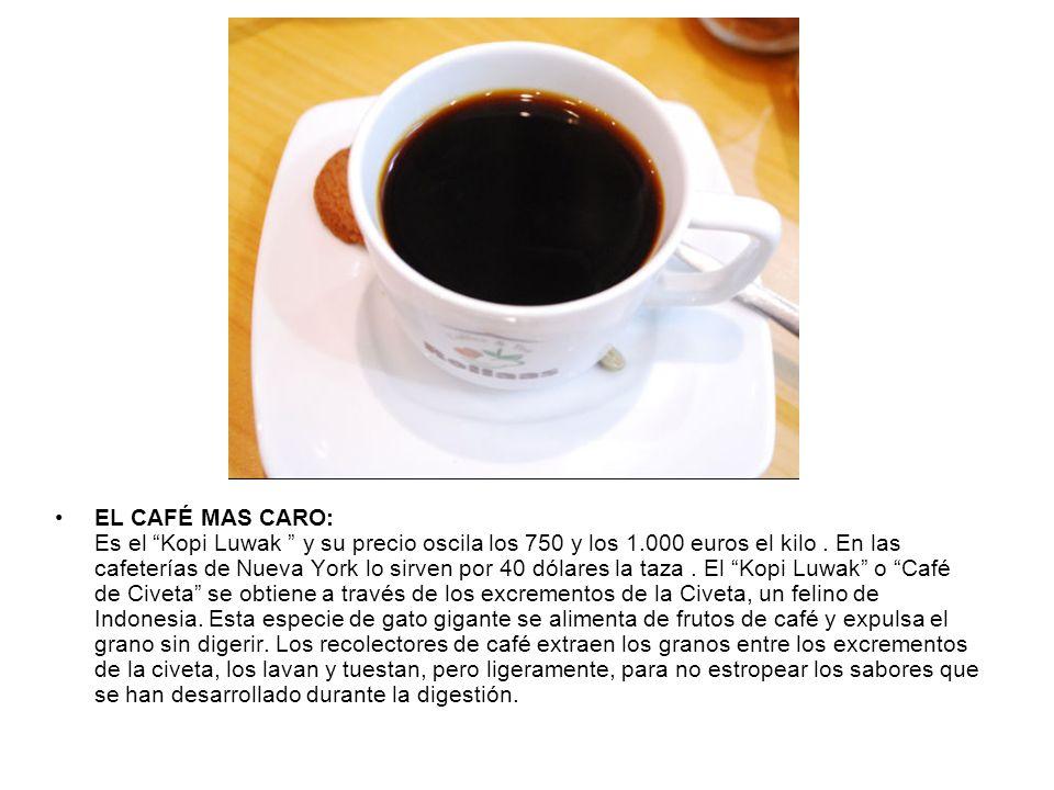 EL CAFÉ MAS CARO: Es el Kopi Luwak y su precio oscila los 750 y los 1.000 euros el kilo .