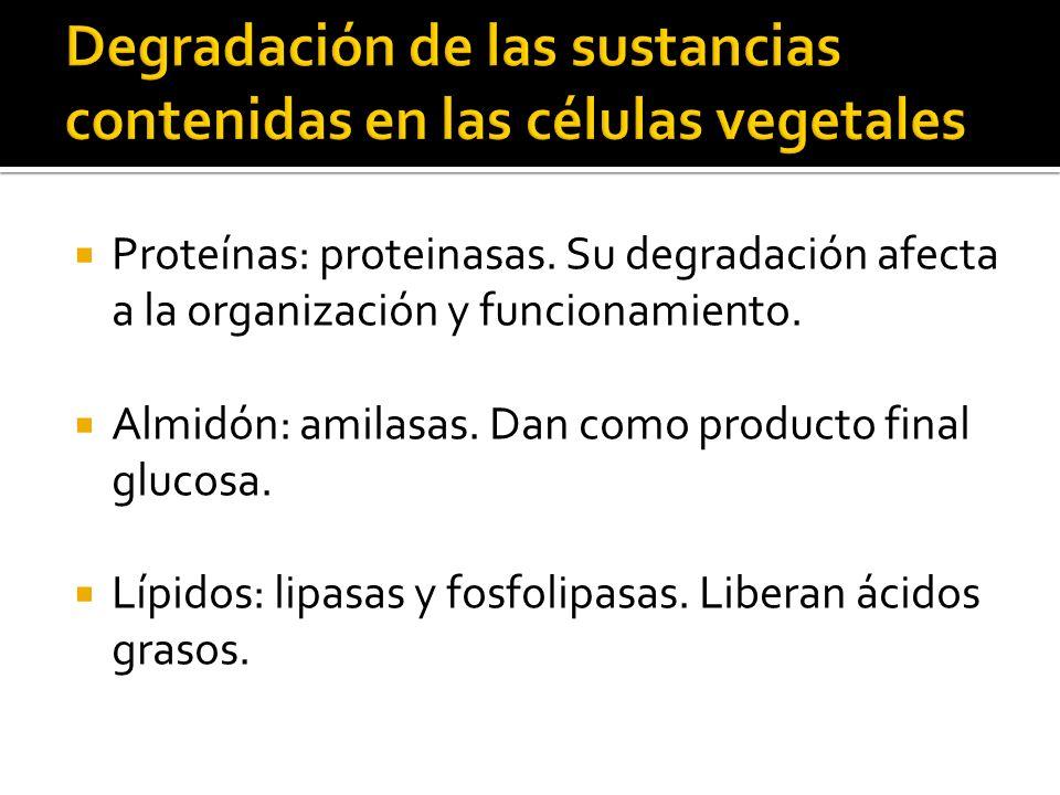 Degradación de las sustancias contenidas en las células vegetales
