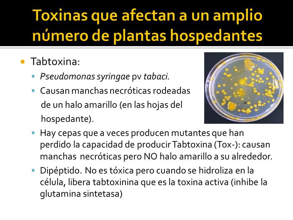 Toxinas que afectan a un amplio número de plantas hospedantes