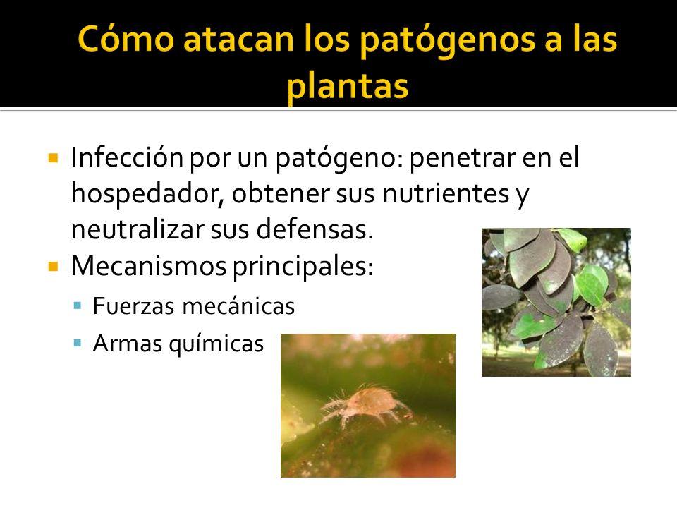Cómo atacan los patógenos a las plantas
