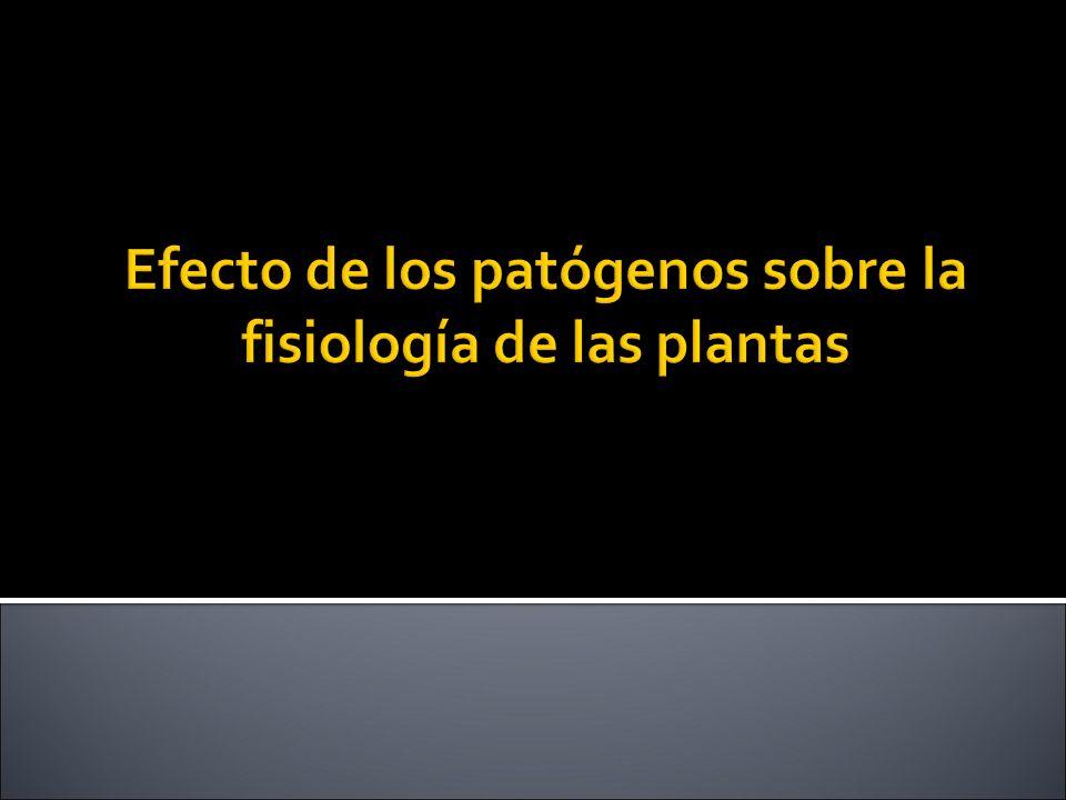 Efecto de los patógenos sobre la fisiología de las plantas