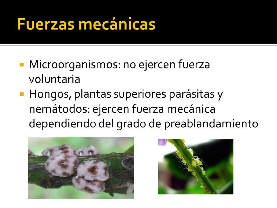 Fuerzas mecánicas Microorganismos: no ejercen fuerza voluntaria