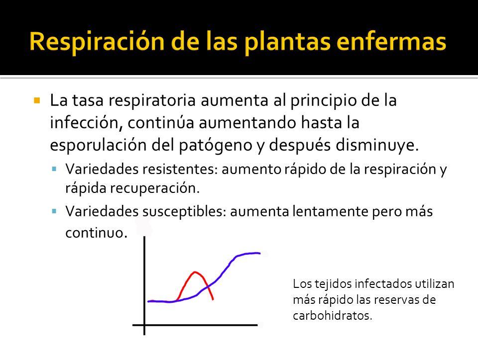 Respiración de las plantas enfermas