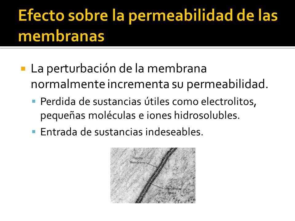 Efecto sobre la permeabilidad de las membranas