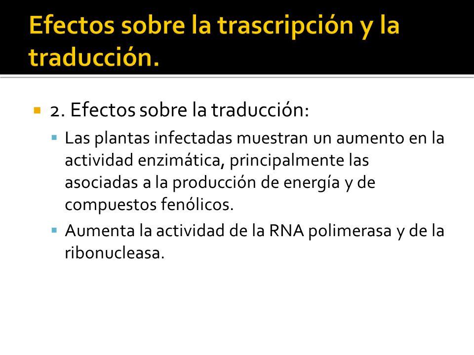 Efectos sobre la trascripción y la traducción.