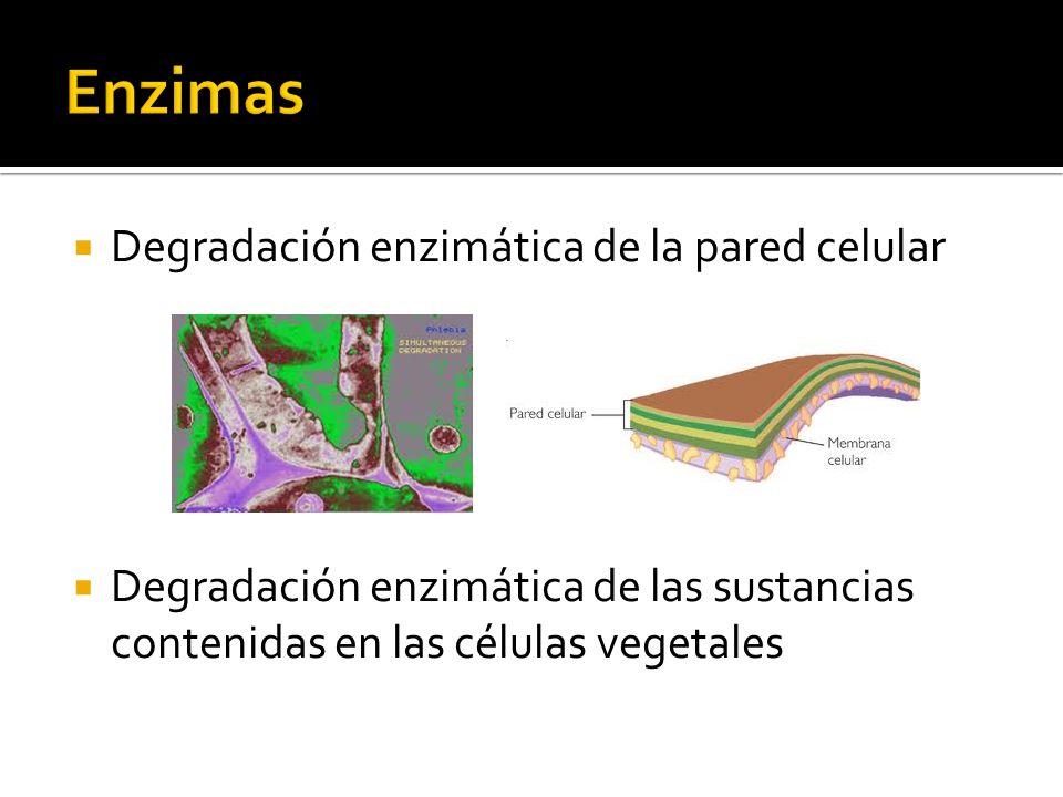 Enzimas Degradación enzimática de la pared celular