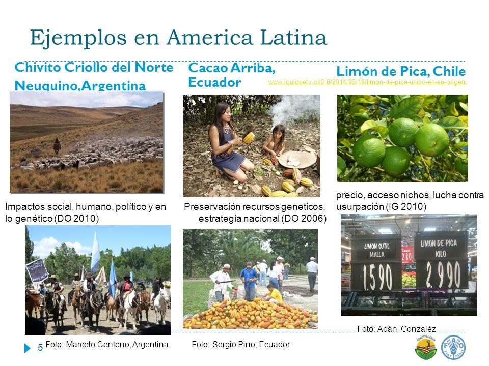 Ejemplos en America Latina
