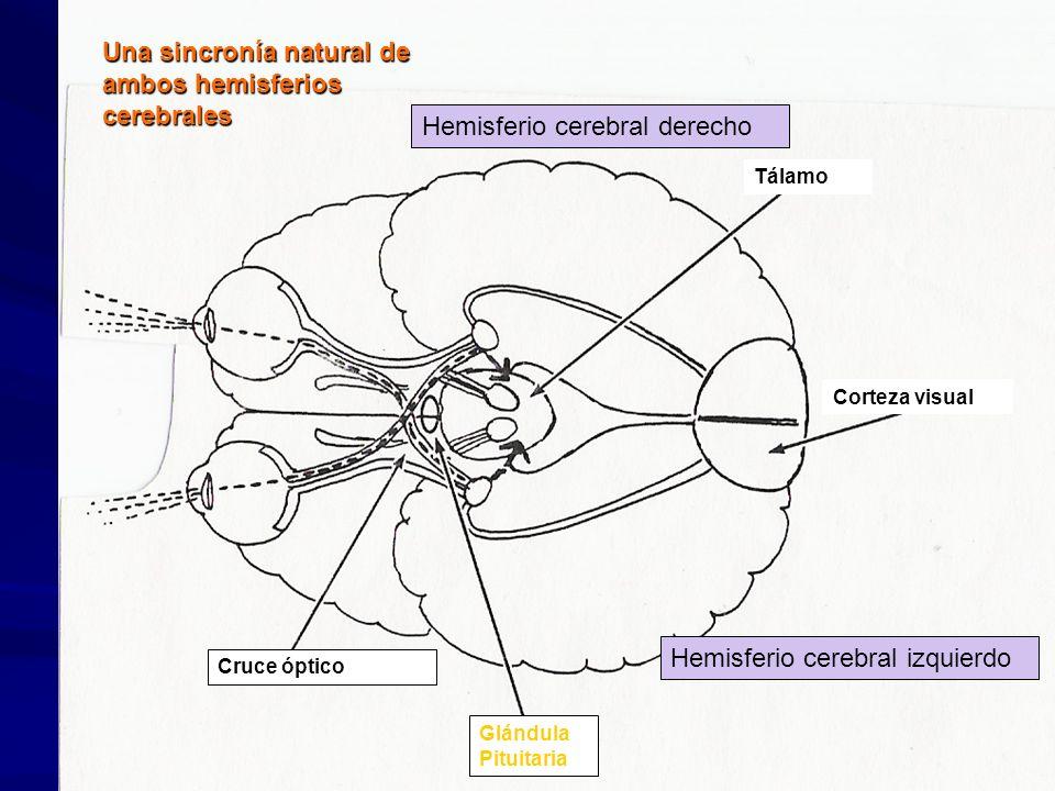 Una sincronía natural de ambos hemisferios cerebrales