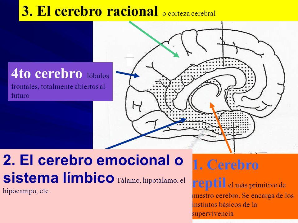 3. El cerebro racional o corteza cerebral