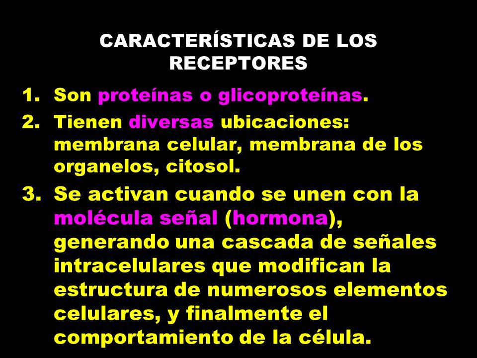 CARACTERÍSTICAS DE LOS RECEPTORES