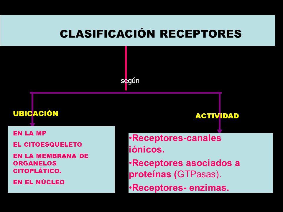 CLASIFICACIÓN RECEPTORES
