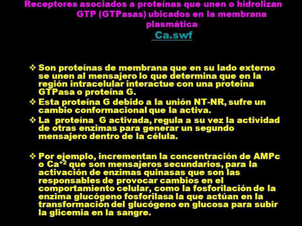 Receptores asociados a proteínas que unen o hidrolizan GTP (GTPasas) ubicados en la membrana plasmática Ca.swf