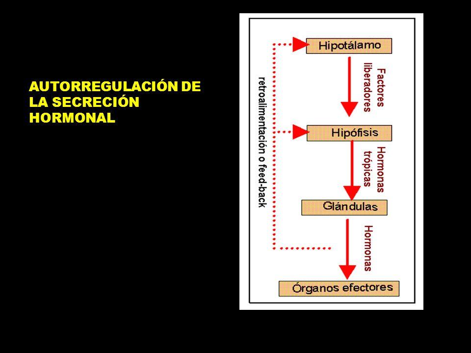 AUTORREGULACIÓN DE LA SECRECIÓN HORMONAL