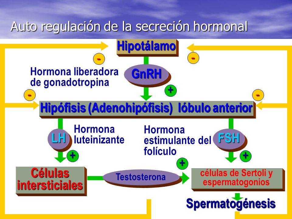 Auto regulación de la secreción hormonal