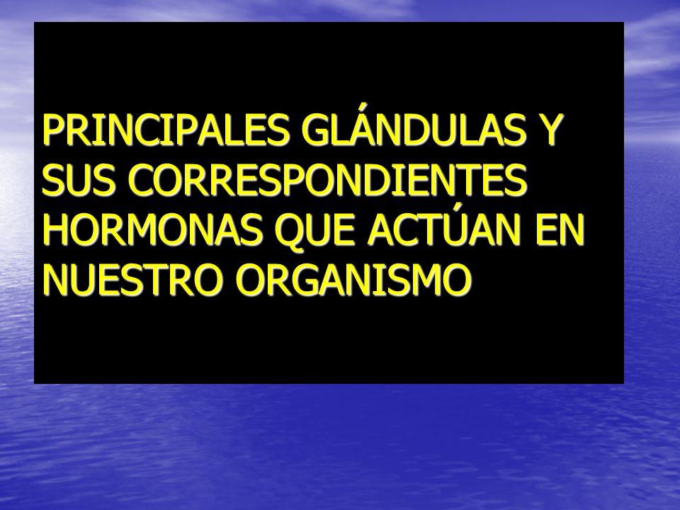 PRINCIPALES GLÁNDULAS Y SUS CORRESPONDIENTES HORMONAS QUE ACTÚAN EN NUESTRO ORGANISMO