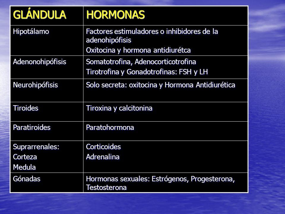 GLÁNDULA HORMONAS Hipotálamo