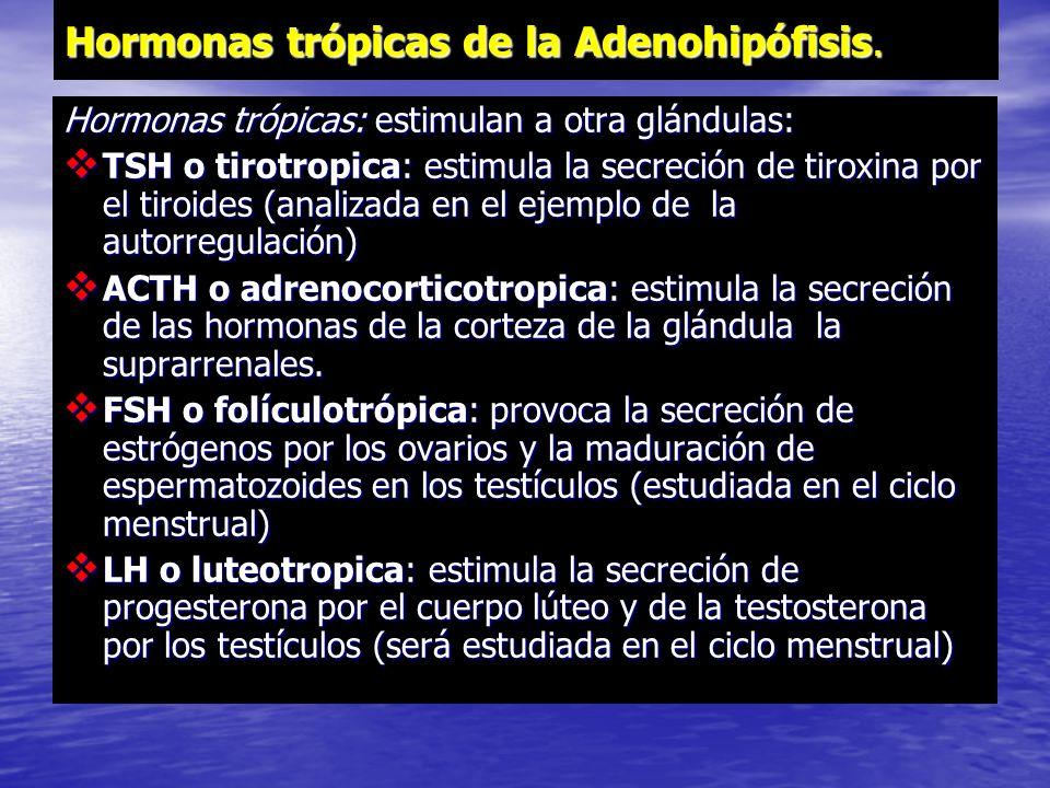 Hormonas trópicas de la Adenohipófisis.