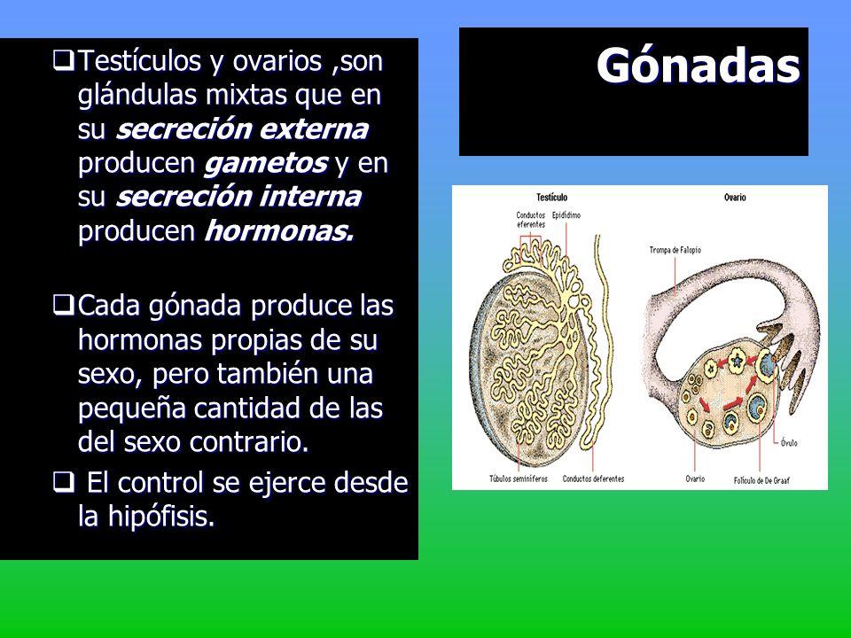 GónadasTestículos y ovarios ,son glándulas mixtas que en su secreción externa producen gametos y en su secreción interna producen hormonas.