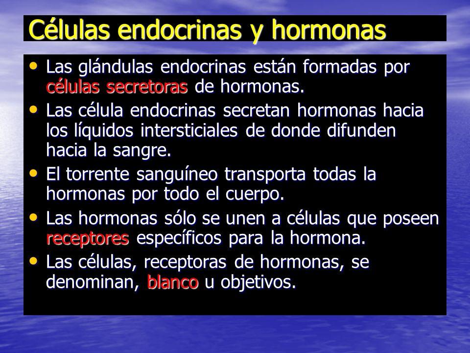 Células endocrinas y hormonas