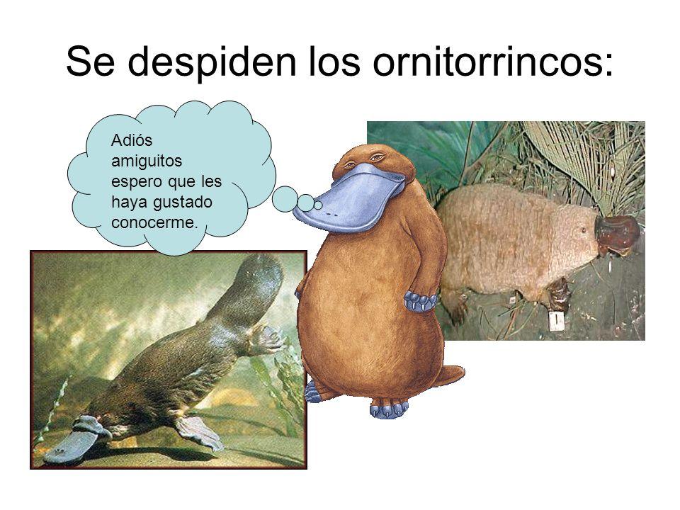 Se despiden los ornitorrincos: