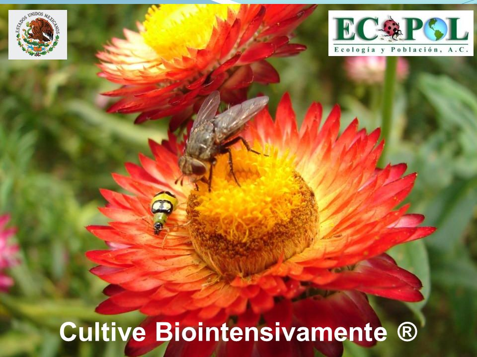 Cultive Biointensivamente ®