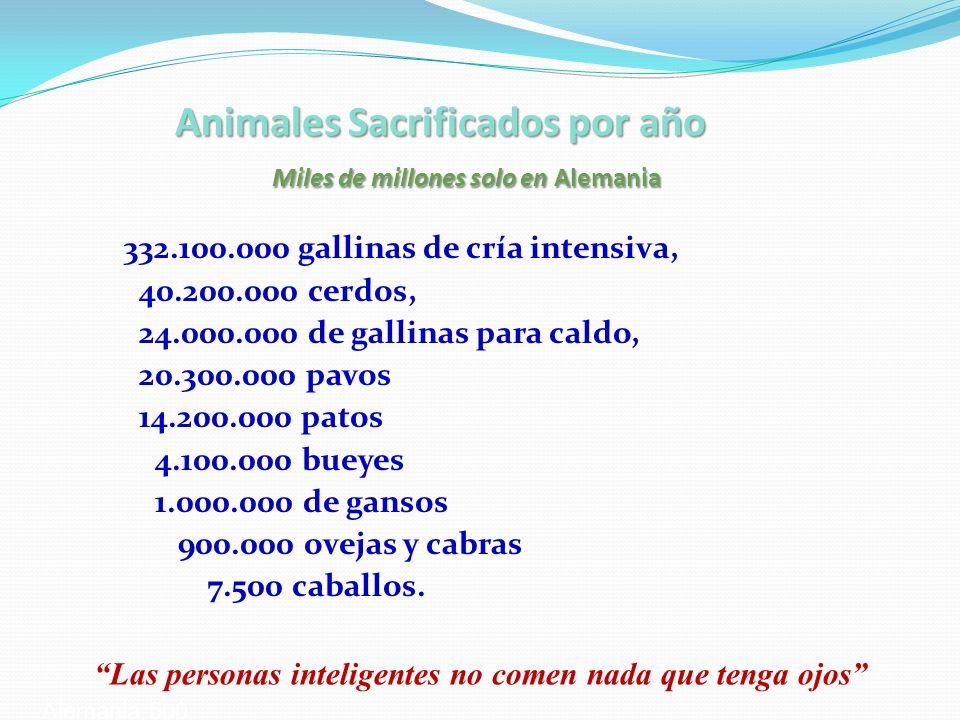 Animales Sacrificados por año Miles de millones solo en Alemania