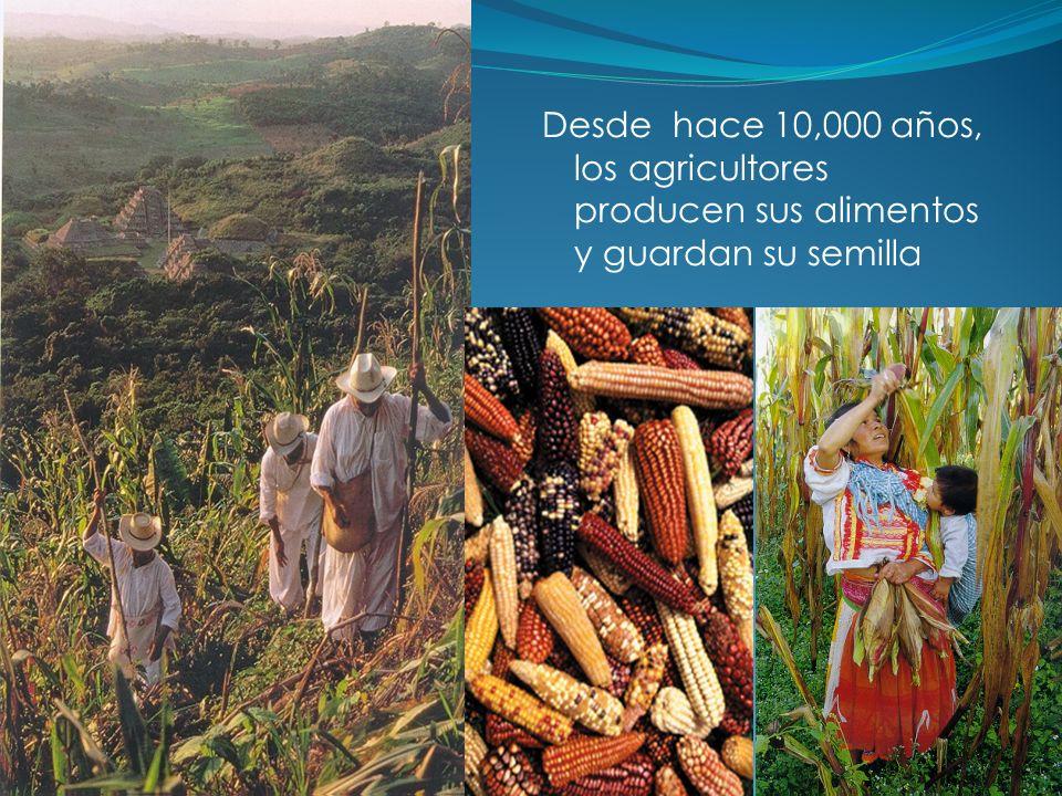 Desde hace 10,000 años, los agricultores producen sus alimentos y guardan su semilla