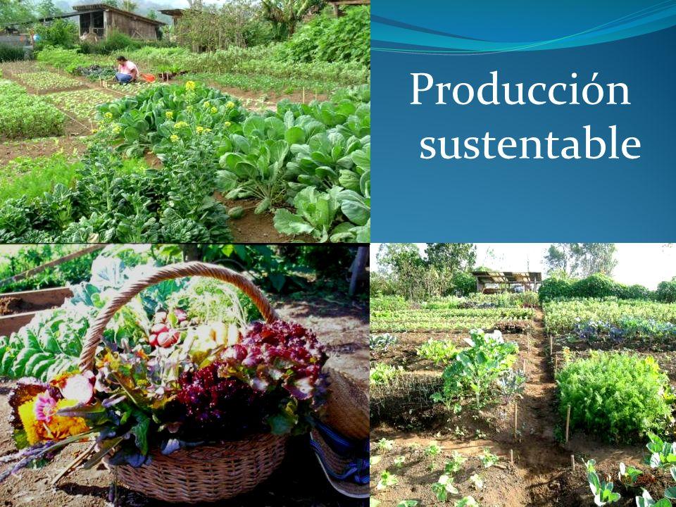 Producción sustentable