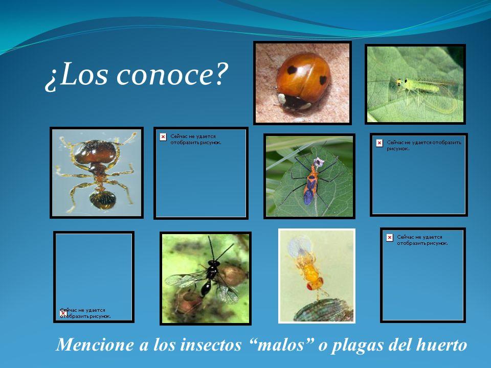 ¿Los conoce Mencione a los insectos malos o plagas del huerto