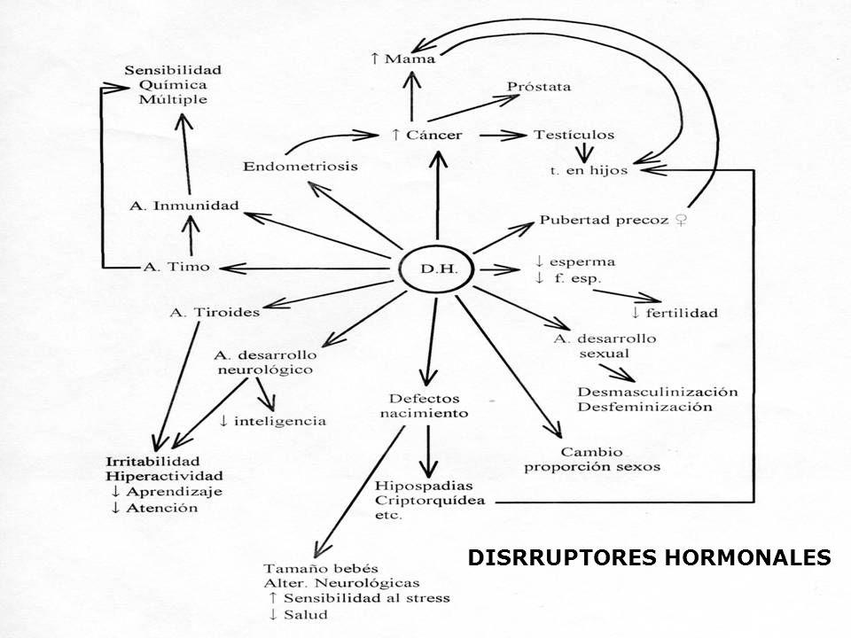 DISRRUPTORES HORMONALES