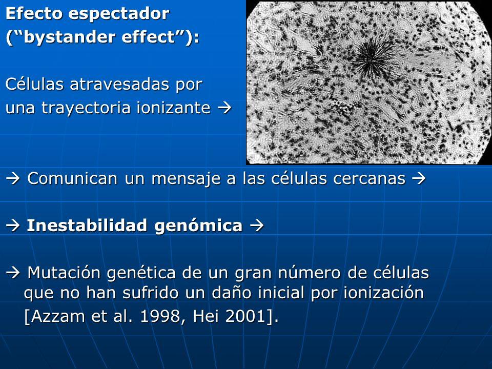 Efecto espectador ( bystander effect ): Células atravesadas por. una trayectoria ionizante   Comunican un mensaje a las células cercanas 