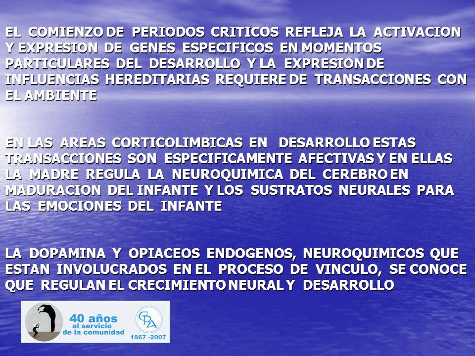 EL COMIENZO DE PERIODOS CRITICOS REFLEJA LA ACTIVACION Y EXPRESION DE GENES ESPECIFICOS EN MOMENTOS PARTICULARES DEL DESARROLLO Y LA EXPRESION DE INFLUENCIAS HEREDITARIAS REQUIERE DE TRANSACCIONES CON EL AMBIENTE EN LAS AREAS CORTICOLIMBICAS EN DESARROLLO ESTAS TRANSACCIONES SON ESPECIFICAMENTE AFECTIVAS Y EN ELLAS LA MADRE REGULA LA NEUROQUIMICA DEL CEREBRO EN MADURACION DEL INFANTE Y LOS SUSTRATOS NEURALES PARA LAS EMOCIONES DEL INFANTE LA DOPAMINA Y OPIACEOS ENDOGENOS, NEUROQUIMICOS QUE ESTAN INVOLUCRADOS EN EL PROCESO DE VINCULO, SE CONOCE QUE REGULAN EL CRECIMIENTO NEURAL Y DESARROLLO