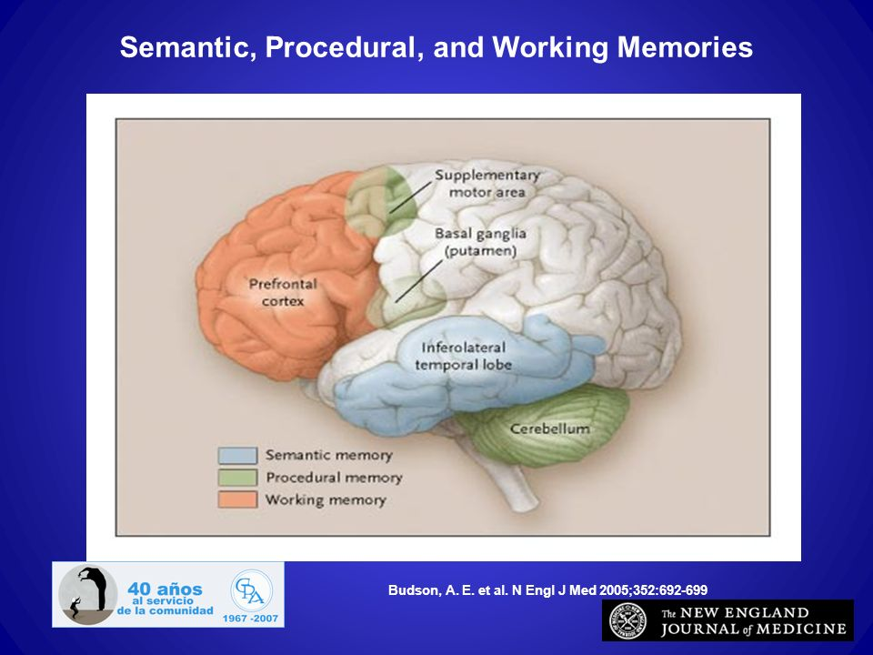 Semantic, Procedural, and Working Memories