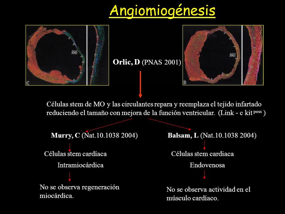 Angiomiogénesis Orlic, D (PNAS 2001)