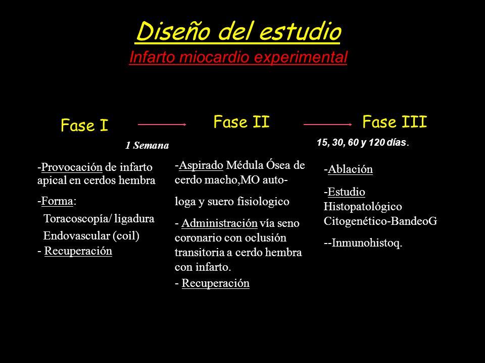 Diseño del estudio Infarto miocardio experimental Fase I Fase II